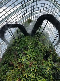 Gardens By The Bay (Singapore) - 2019 All You Need to Know Before You Go (with Photos) - Singapore, Singapore Mosquito Spray, Singapore Singapore, Before We Go, Gardens By The Bay, Tree Lighting, Out Of This World, Horticulture, Just Go, Need To Know