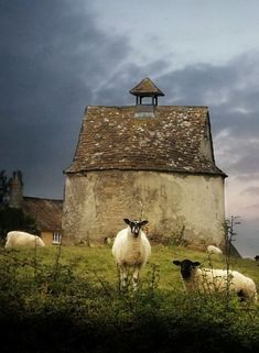 This just makes me want to move to Ireland, buy some land, and start a sheep farm. Think it'd be quite peaceful. Farm Animals, Animals And Pets, Cute Animals, Country Barns, Old Barns, Country Living, Beautiful Creatures, Animals Beautiful, Sheep Paintings