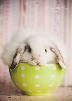 Lop bunny in a bowl:)