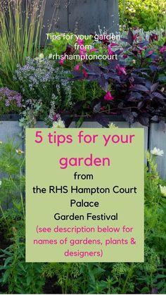 Low Maintenance Garden Design, Rhs Hampton Court, Mini Tour, Small Garden Design, Gardening Tips, The Hamptons, Plants, Design Ideas, Plant