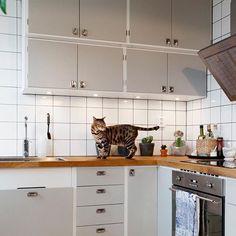 Funkiskök byggt på Metodskåp från IKEA. Tickabeslag på luckor och Nyströmshandtag på lådfronter. Katt på bänkskiva i massiv ek. #funkis #retro #retrokök #retrokitchen #nyströms #ticka #katt #platsbyggt #järfällakök #ikea #ikeametod
