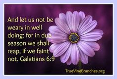 And let us know be weary in well doing; for in due season we shall reap, if we faint not. Galatians 6:9 www.truevinebranches.org