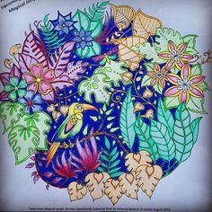 40 Best Magical Jungle Johanna Basford Images Magical Jungle
