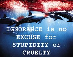 ignorance is no excuse for stupidity or cruelty