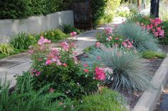 If you live in a temperature zone similar to that of southern California or the Mediterranean, you can get creative in your sidewalk space with a mixture of flowers, edible plants and ornamental grasses that look beautiful year round.