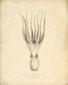 Vintage Squid Print