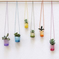 Air plants clay mini pots