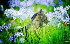 Cat amongst flowers