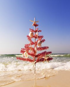 Red Christmas Tree on the Beach. Christmas at the Beach: http://www.pinterest.com/complcoastal/christmas-at-the-beach/
