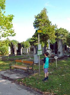Dem wiener Zentralfriedhof erforschen. Pilgrims, Exploring, Places, Life
