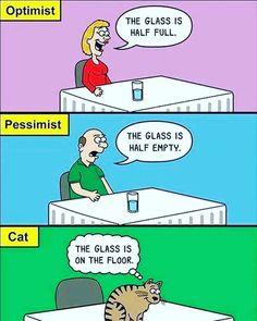 Oh, #cats. #catmeme #cats #funny #funnycat #haha #silly #cute #catrescue #jsaf #jerseyshoreanimalfoundation #kitty #kitties #animallover #adopt #adoptdontshoo