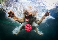 Hilarious Diving Dogs by Seth Casteel - 3