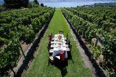 Image result for dinner in a vineyard