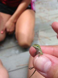 Unimpressed lizard.