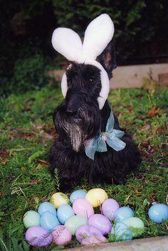 The Easter Scottie!