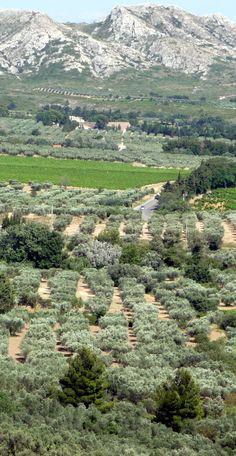 the Alpilles Massif and olive trees cultivation, Bouches-du-Rhône dpt,