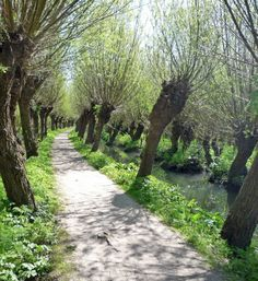 That is such a pretty walkway. Beautiful World, Beautiful Gardens, Cool Pictures, Cool Photos, Amsterdam Holland, Green Life, Luxembourg, Pathways, Country Life