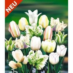 Tulpen-Mix 'Perfect Partners®' 'White Blend'