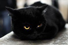 Love my black cats!
