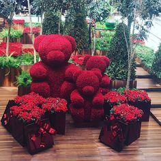 No photo description available. Beautiful Rose Flowers, Red Rose Flower, Love Rose, Red Roses, Rose Flower Arrangements, Montreal Botanical Garden, Romantic Surprise, Rose Decor, Luxury Flowers