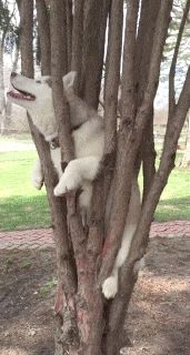 catgifcentral: Tree Climbing Dog - み(廉) Cute Funny Animals, Funny Animal Pictures, Dog Pictures, Funny Cute, Doggies, Pet Dogs, Dog Cat, Cute Puppies, Dogs And Puppies