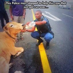 Human compassion for an injured animal...  #compassion #animals