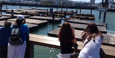 Sea Lions of SF