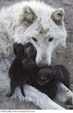 Love em Wolves