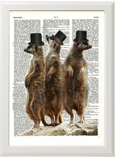 Meerkat Print Meerkat Art Meerkat Poster Dictionary by PigAndGin, $8.00