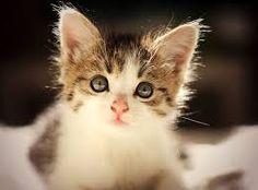 imagenes de gatos - Buscar con Google