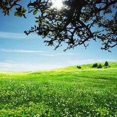Green Meadow - Wall Mural & Photo Wallpaper - Photowall