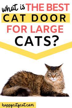 32 Best Cat Door Cat Door Ideas Cat Door Cats Cat Flap