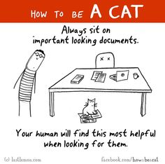 how to be a cat - true