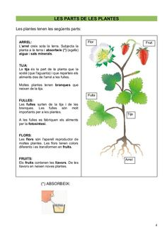 les plantes - Buscar con Google Science Fair Projects, Calendula, Reading Comprehension, Herbs, Nature, Google, Types Of Sentences, At Word Family, Plant Parts