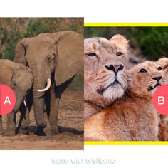 Which one is cuter? Click here to vote @ http://getwishboneapp.com/share/9376172