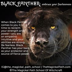 Animal Spirit Guides, Spirit Animal, Animal Meanings, Manifestation Journal, Pagan Art, Power Animal, Black Jaguar, Shamanism