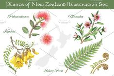 Set of hand-drawn pencil illustrations of New Zealand plants. The zipped file includes four jpegs - Manuka, Silver Fern, Pōhutukawa and Kōwhai, isolated on Flower Tattoo Foot, Flower Tattoos, Key Tattoos, Butterfly Tattoos, Skull Tattoos, Foot Tattoos, Sleeve Tattoos, Pencil Illustration, Graphic Illustration
