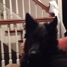 Yorkie Just Wont Eat Dog Food