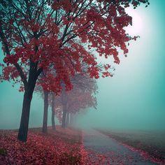 red tree path