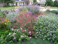 Salvia greggii with Mexican Bush Sage, Fall Aster, Russian Sage. Easy drought and heat tolerant plant comes in many colors.