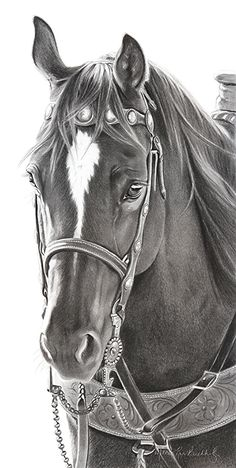 "Fisher's Pick by Mary Ross Buchholz Graphite & Charcoal ~ 18.5"" x 9"""