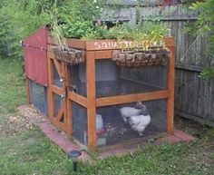Green roof + water collection system chicken coop for 4 chickens in a 4x8 footprint.