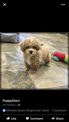 Poochon Puppies, Teddy Bear, Toys, Animals, Life, Activity Toys, Animales, Animaux, Clearance Toys