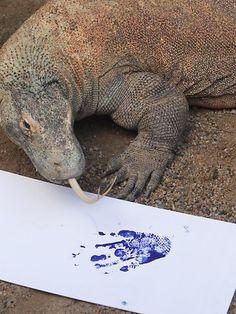 Taronga Zoo animal paw prints