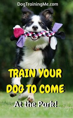 The Perfect Dog Training Book: IncludesTraining, Dog Welfare, Diets & Dog First Aid