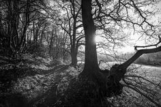 Autumnal Light and colour Ridge Hill Woods in Black and White. - Autumn change and light Ridge hill woods Kingswinford Stourbridge.