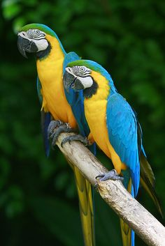 Two macaws, Jurong Bird Park Singapore | Flickr - Photo Sharing!