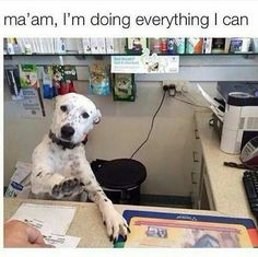 Funny animal pictures always make you laugh because of their expressions or the hilarious captions. These funniest animal pictures are full of humor. Humor Animal, Funny Animal Memes, Dog Memes, Cute Funny Animals, Funny Animal Pictures, Funny Cute, Funny Dogs, Funny Memes, Dog Pictures