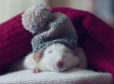 Kaikki me haluaisimme jäädä vällyjen väliin näillä pakkasilla. Mutta tämä hiiri voi oikeasti tehdä niin!