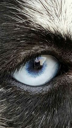 Look at the reflection in the eye...
